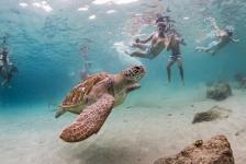 Snorkelen met zeeschildpadden – Het verhaal achter de foto