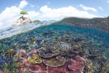 Maleisië roept gigantisch gebied vol tropische koraalriffen uit tot beschermd gebied