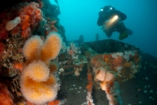 Elf nieuwe soorten ontdekt in Noordzee