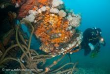 Belangrijke stap voor bescherming Noordzee