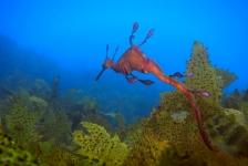 Sverrin Schoonderwoerd – Oceans and Seas, Australia