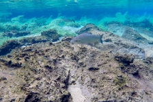 Ayumi Kuramae – Snorkelen in een natuurlijk aquarium