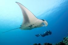 Unieke aanbieding – met Wild Water naar de Malediven!