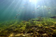 Wildernis onder water – vanaf 6 januari op tv