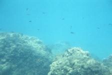 Het is 1963: mijn eerste onderwaterfoto – Het verhaal achter de foto