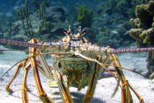 Unieke voorvertoning van Wonders of the Sea 3D