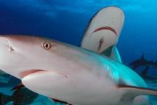 Ilse van Minnen – Verrassend mooi duiken in de Bahama's