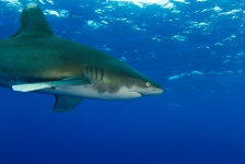 Christiaan Van Roeyen – Spannende haaienduik