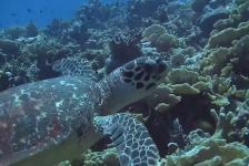 Jeanette Kamphuis – Encounters at Addu, Maldives