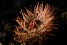 Ad Aleman – Onderwaterfoto's met alleen natte handen