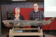 Unieke haai ontdekt in Oostende