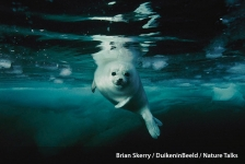 Nature Talks – Met National Geographic-fotograaf Brian Skerry de wereld rond