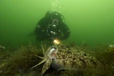 John Landa – Een mooi duikje met sepia's