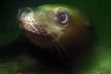 Reportagewedstrijd – Avontuurlijk duiken in Canada