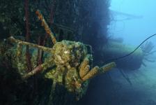 Nederland wil scheepswrakken beter beschermen