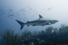 Op naar onze eigen Shark Week 2016!