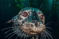 Alex Mustard – een onderwaterfotograaf met passie en visie