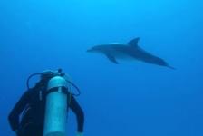 Grote hersenen zijn reden van 'mensachtig' gedrag bij dolfijnen