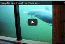 Dolfijn bevalt voor oog van camera
