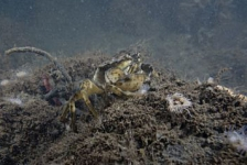 Grevelingenmeer is onder 16 meter diepte helemaal dood!