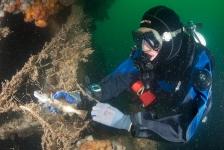 Een gezonde en netvrije Noordzee? Help mee!
