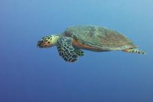 Leendert Smit – Een trip naar de Rode Zee (2)