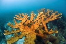 Succesvolle ivf-behandeling bij bedreigde koraalsoort