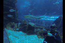 Eva Heijnen – Shark Dive in the Dubai Mall Aquarium