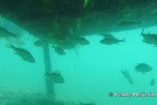 Fedde Meijerink – Scuba diving in Hungary, Gyékényes