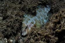 Met de lipvissen op één oor