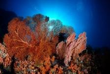 Klimaatverandering zal ook zeebodem treffen