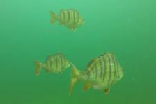 Steven Stegeman – Een duik in kraakhelder water!