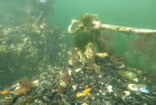 Harry Brummelhuis – Zeeland is ook mooi onderwater