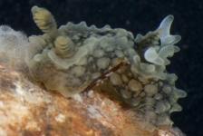 2012; nu al een voortreffelijk zeenaaktslakkenjaar