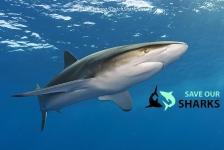 Haaiencollege in Blijdorp