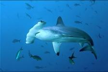 7 dingen die we in 2017 over haaien hebben geleerd
