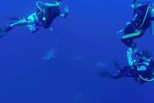 Hans van Os – Zwemmen tussen Hammerheads bij Deadalus Rif