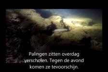 Harry Brummelhuis – Nachtduiken bij de kerncentrale in Lingen