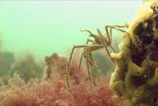 Video: Herfstkleuren onder water
