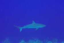 Jans van Wieren – Blue Hole Belize