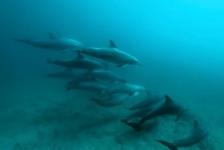 Joost Boerman – Freediving met dolfijnen