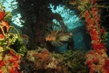 Aike Willemsen – Hurghada (deel 5)