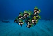 Nieuw-Zeeland wil groot natuurreservaat in oceaan
