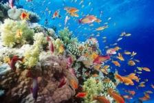 Vissen kunnen ongezond rif ruiken