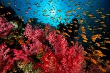 Voedselketen oceanen staat op instorten
