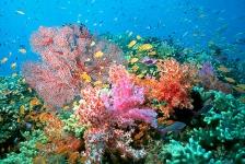 (Van) Alles over koraal in Burger's Zoo