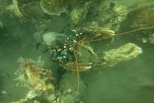 Harry Brummelhuis – Leden van Galathea volgen Specialisatie Onderwaterbiologie