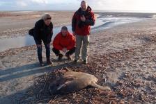 Bas van der Sanden – Maanvis op Ameland