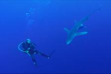 Mirjam van der Sanden – Over haaien, bootjes en zeeziekte