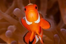 Film: Finding 27 Nemos